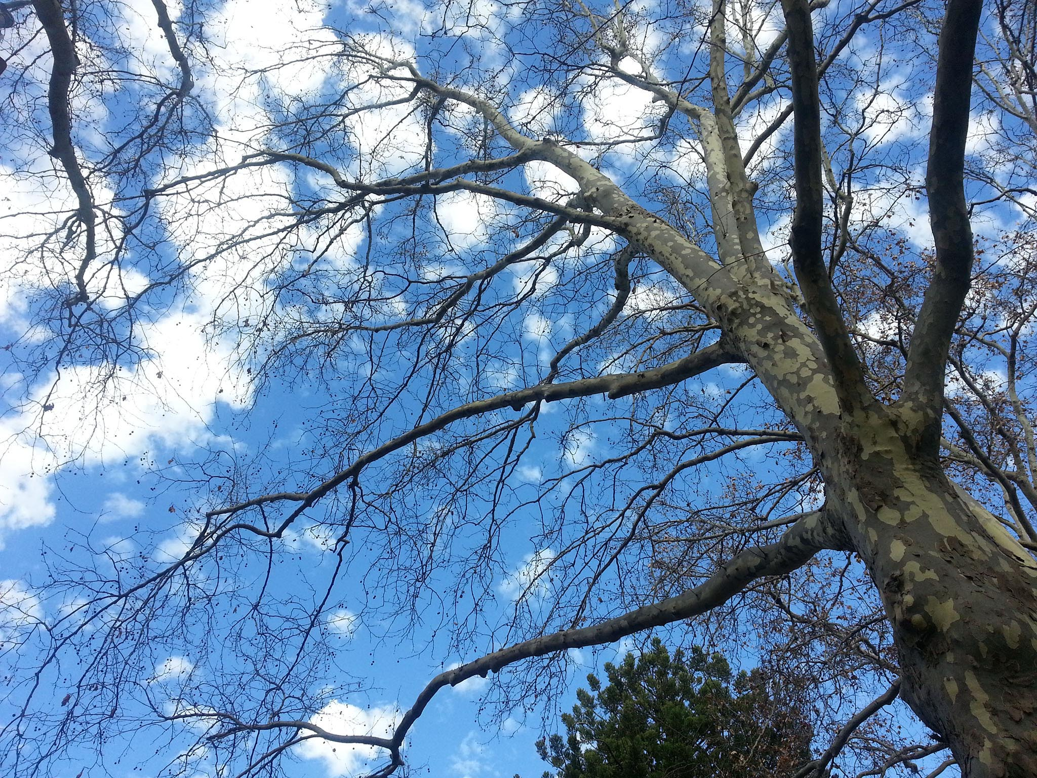 tree-and-blue-sky