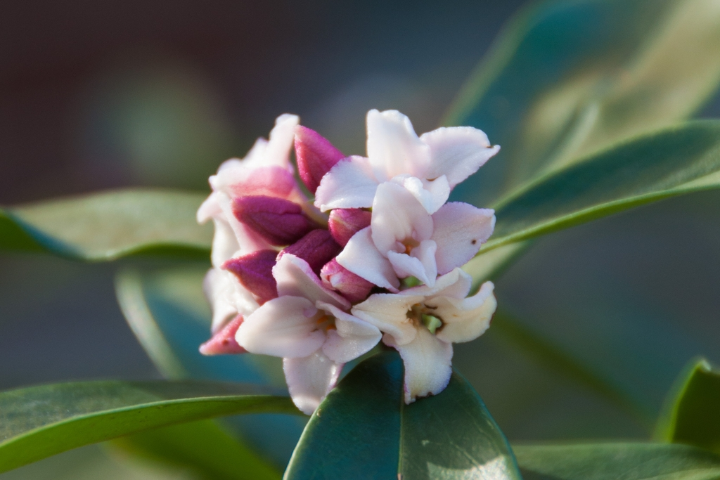 fragrant-flower-close